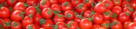 Tomatenbanner